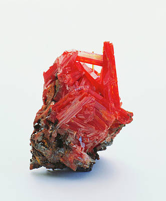 Vivid Colour Photograph - Prismatic Crocoite Crystals by Dorling Kindersley/uig