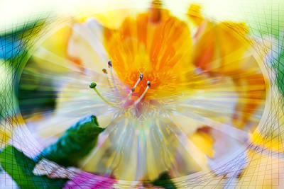 Photograph - Prisms Of Nature - Meditation - Rhododendron  by Marie Jamieson