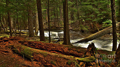 Photograph - Pristine Forest by Sam Rosen