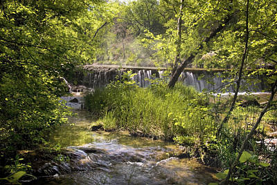 Photograph - Pristine Forest Stream by Cindy Rubin