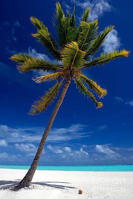 Pristine Tropical Beach  Art Print