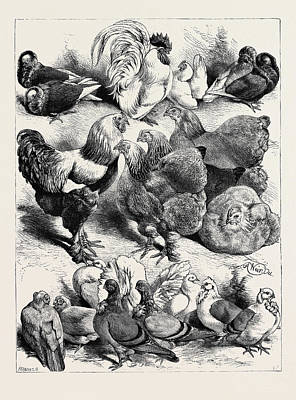 Prize Birds, Crystal Palace Poultry Show Art Print by English School
