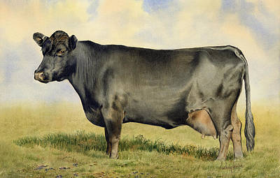 Prize Dexter Cow Art Print by Anthony Forster