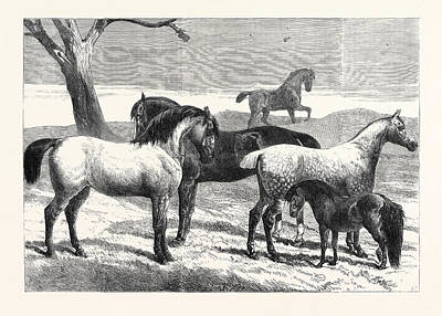 Prize Horses At The Horse Show In The Agricultural Hall Art Print by English School