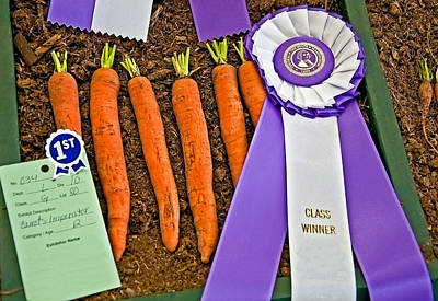 Photograph - Prize Winning Carrots by Valerie Garner
