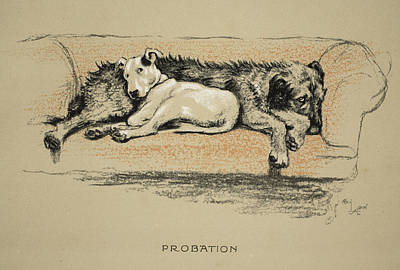 Bull Drawing - Probation, 1930, 1st Edition by Cecil Charles Windsor Aldin