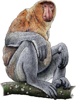 Photograph - Proboscis Monkey by Roger Hall