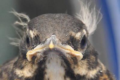 Photograph - Professor Crazy Bird by Daniel Ness