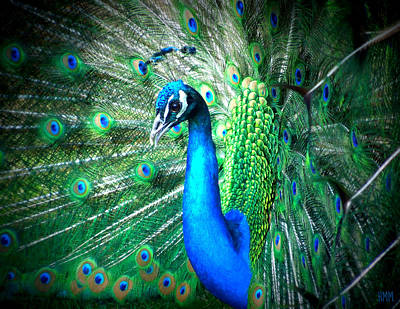 Art Print featuring the photograph Profile Of A Peacock  by Heidi Manly