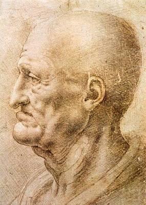 1505 Painting - Profile Of An Old Man by Leonardo da Vinci