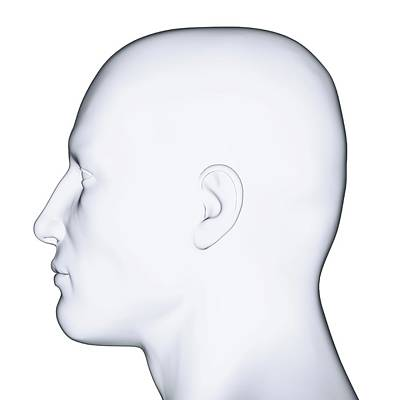 Human Head Photograph - Profile Of Man's Head by Dorling Kindersley/uig