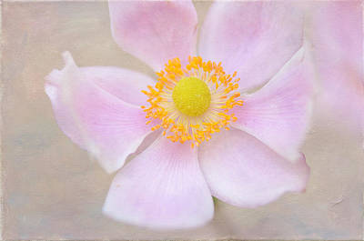 Photograph - Profusion Of Pink by Fraida Gutovich