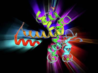 Molecular Structure Photograph - Programmed Cell Death Protein 6 Molecule by Laguna Design
