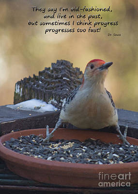 Photograph - Progress Progresses Fast Sometimes by Sandra Clark