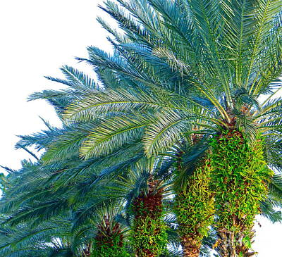 Art Print featuring the photograph Progression Of Palms by Joy Hardee