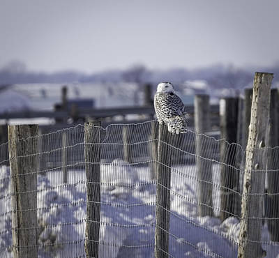 Pole Position Photograph - Project Snowstorm by Thomas Young