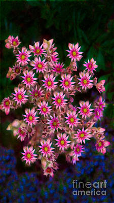 Photograph - Promising Pink Petals Abstract Garden Art By Omaste Witkowski by Omaste Witkowski