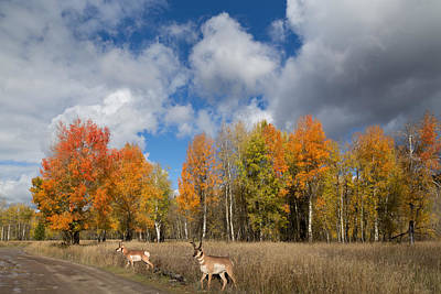 Photograph - Pronghorn In Autumn by Kathleen Bishop
