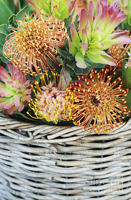 Protea Basket Art Print by Neil Overy