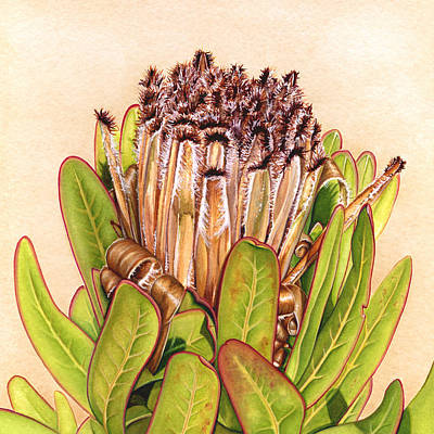 Painting - Protea In Autumn by Suzannah Alexander