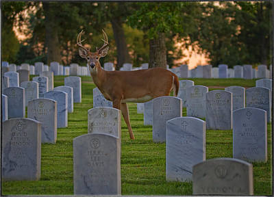Photograph - Protecting Our Departed Heroes by Linda Tiepelman