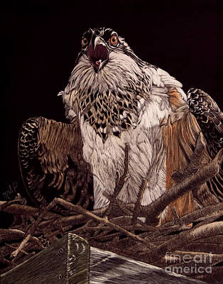 Photograph - Protecting The Nest by Margaret Sarah Pardy