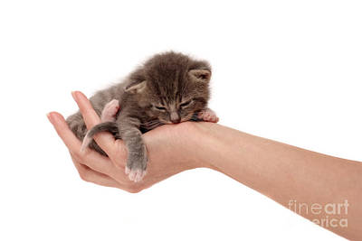 Pet Care Photograph - Protection by Viktor Pravdica