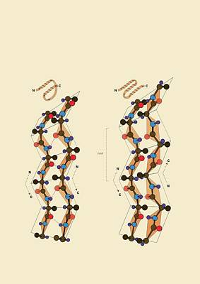 Atom Photograph - Protein Beta Sheets by Ramon Andrade 3dciencia