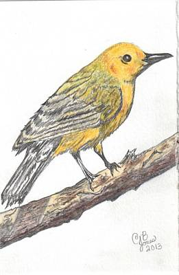 Drawing - Prothonotary Warbler by Chris Bajon Jones