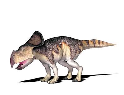Paleozoology Photograph - Protoceratops Dinosaur by Friedrich Saurer