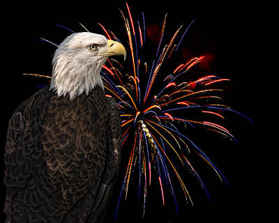 Photograph - Proud And Free 4 by Penny Lisowski