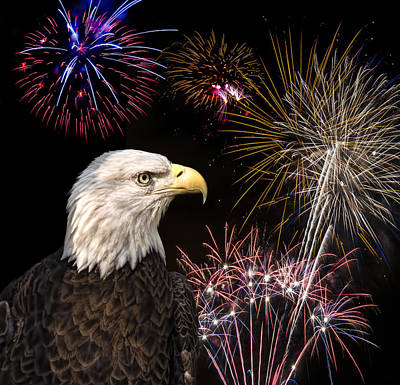 Photograph - Proud And Free 6  by Penny Lisowski