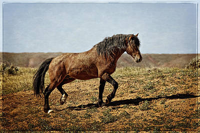 Wild Horse Photograph - Proud And Free by Wes and Dotty Weber