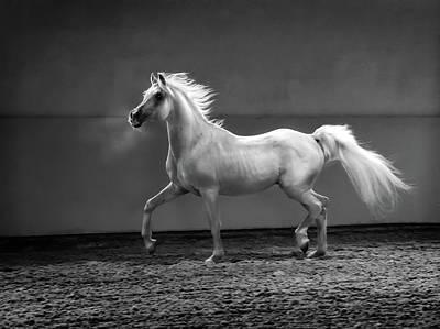 Photograph - Proud Arabian Horse - Stallion In by Kerrick