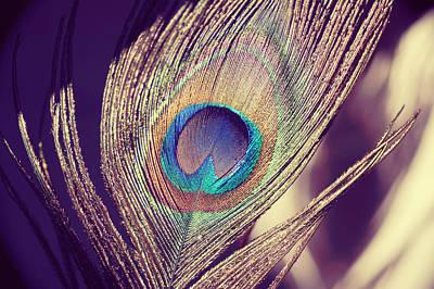 Proud As A Peacock Art Print