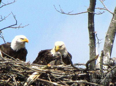 American Eagle Photograph - Proud Eagles With Eaglet by Mitch Spillane
