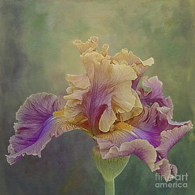Print featuring the photograph Proud Iris by Vicki DeVico