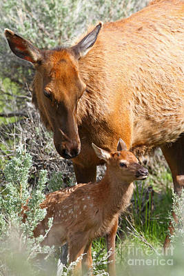 Photograph - Proud Mom by Bill Singleton