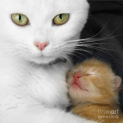 Photograph - Proud Mother by Jo Collins