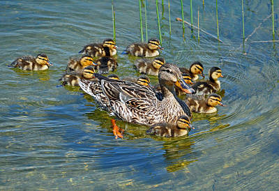 Photograph - Proud Mother by Rodney Campbell