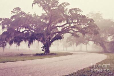 South Louisiana Photograph - Proud Oak In The Fog by Scott Pellegrin