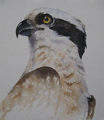 Painting - Proud Osprey by Mary McCullah