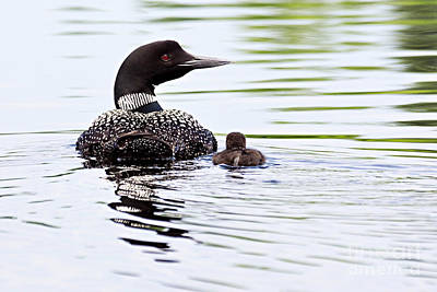 Photograph - Proud Parent by Larry Ricker