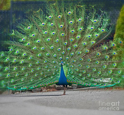 Photograph - Proud Peacock by Valerie Garner