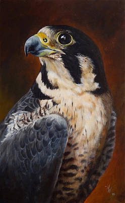 Proud - Peregrine Falcon Original