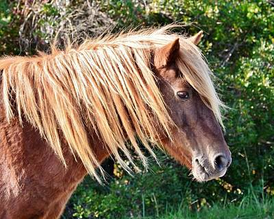 Photograph - Proud Pony - Wild Ponies Of Assateague by Kim Bemis