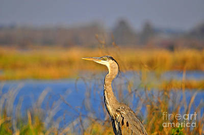 Great Heron Photograph - Proud Profile by Al Powell Photography USA