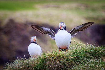 Proud Puffin Art Print by Peta Thames
