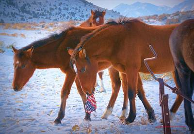 Photograph - Proud To Be An American Icon Of The West by Jeanne  Bencich-Nations