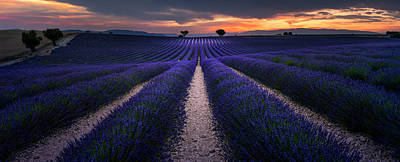 Purple Flowers Photograph - Provence by Arzur Michael